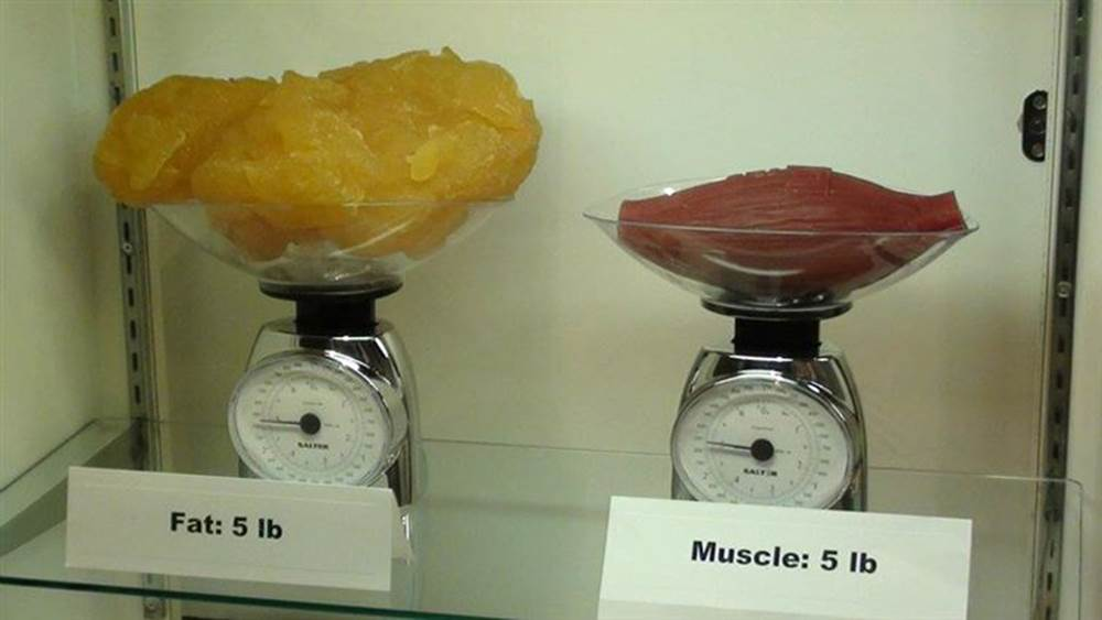 5lbs of fat cosumes more volume in the human bady than 5lbs of muscle